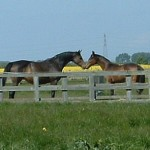 Future Illicit Affair with Future Illusion (as a yearling)